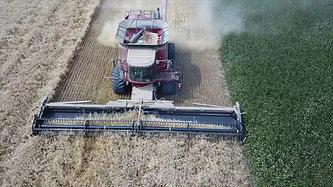Grain Harvest 2018