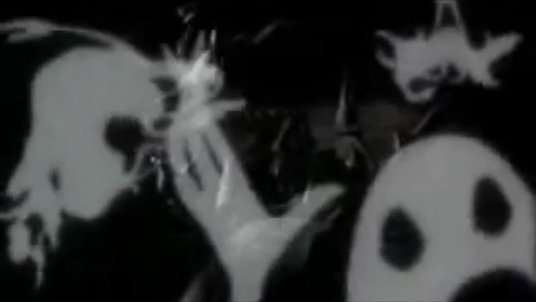 Haunted Wilson Trailer