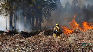 California's Prescribed Fires