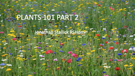 PLANTS 101 PART 2