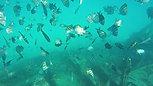 Snorkeling at the shipwreck, Carlisle bay barbados off of Tranqulity Cruises
