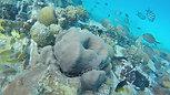 Turtle & Shipwreck Adventure