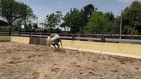 FM Horse Dream Farm: la nostra Fattoria