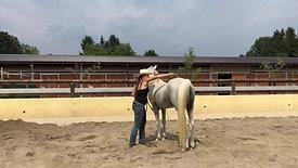 FM Horse Dream Farm: Stalloni da monta