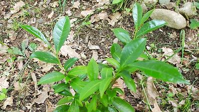 Un jeune plant au printemps