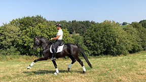 5 yo Black Stallion KWPN prospect by Bordeaux****