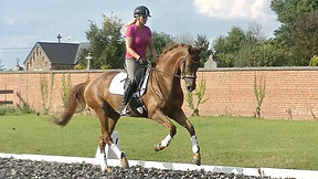 ***5 y old KWPN dressage mare  by Cupido for sale