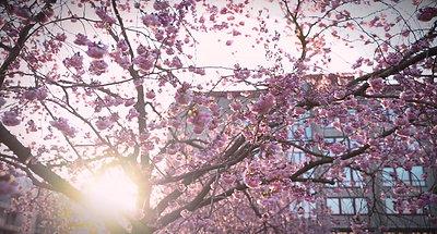 Niu Roller im Frühling