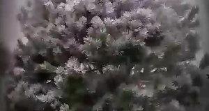 video-1508891760