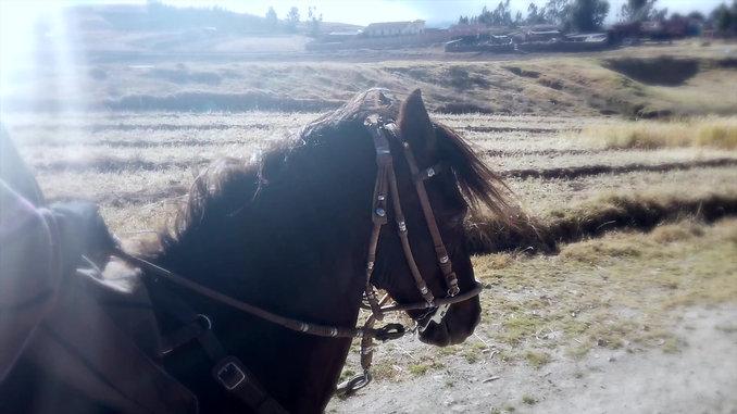 A horseman's paradise
