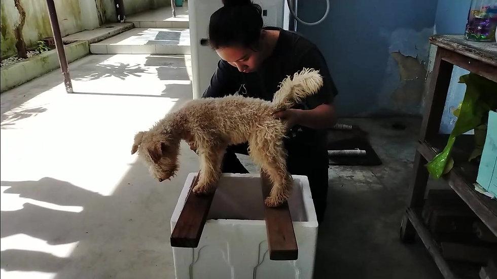 *Puppy Training