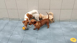 Doggy Water Play Time