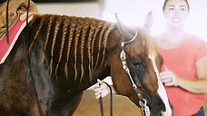 GauxPro Performance Horses