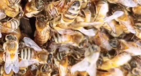 Swarming Oligarchy
