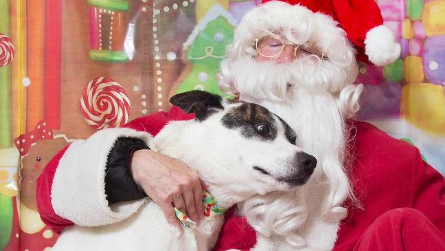 HSHC Santa Pups - Christmas 2016