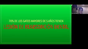 Clase Curso Extension Odontologia veterinaria
