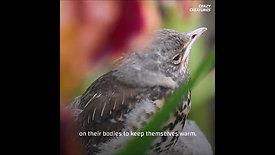 TBD Kuşların kaç gelişim evresi var?