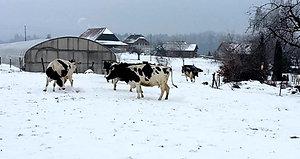 winterweide1