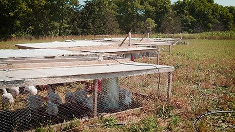 Our Chicken Farmer