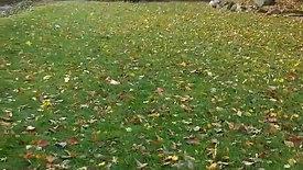 gipper in the fall