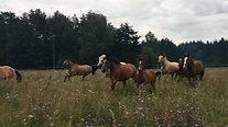 Табун в поле