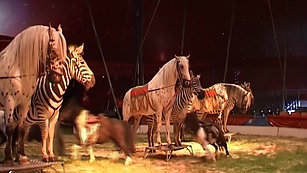 Martin Lacey presents  The Great British Circus, 2004