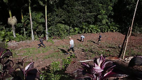 Plantio Florestal