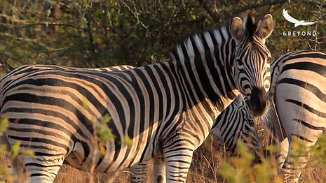 andBeyond - Explore Africa by Private Jet