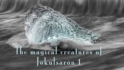 The Magic Creatures of Jökulsárlón 1