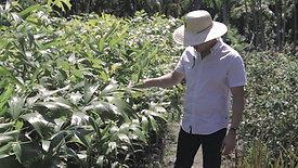 Vertical Garden | A valorização do pequeno produtor