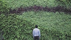 Vertical Garden | Implantação no MIS Experience