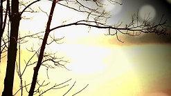 Forest Pond Global Meditation Group