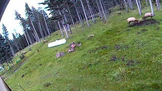 Elk Fight 2