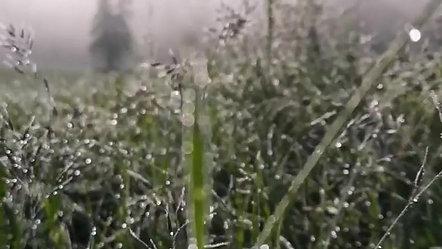 Natur (6)
