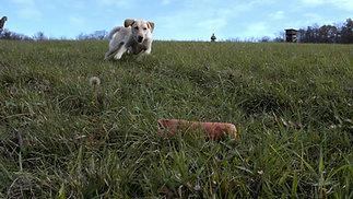 Hundetrainerin & Labradorzüchterin - Elisabeth Kreiner