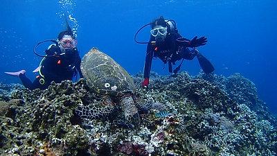 ケラマウミガメ