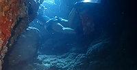 青の洞窟スキンダイビング