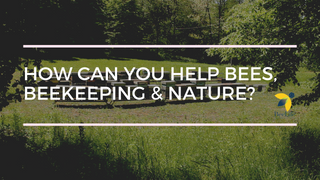 How can You Help Bees Beekeeping  Nature
