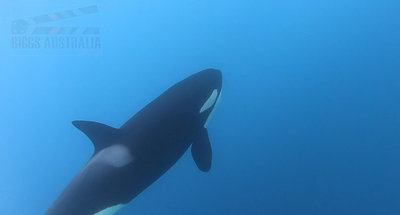 Blue Whale slomo 2