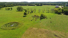 Stewarts Farm