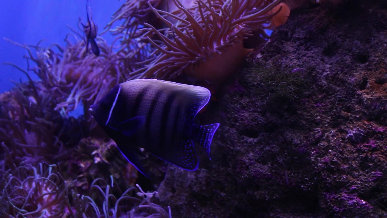 Sydney's Sea Life