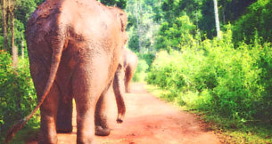 Elephant-Jungle-Paradise-Park