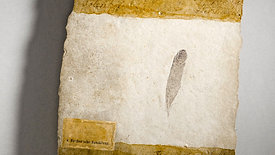 Archaeopteryx feather color