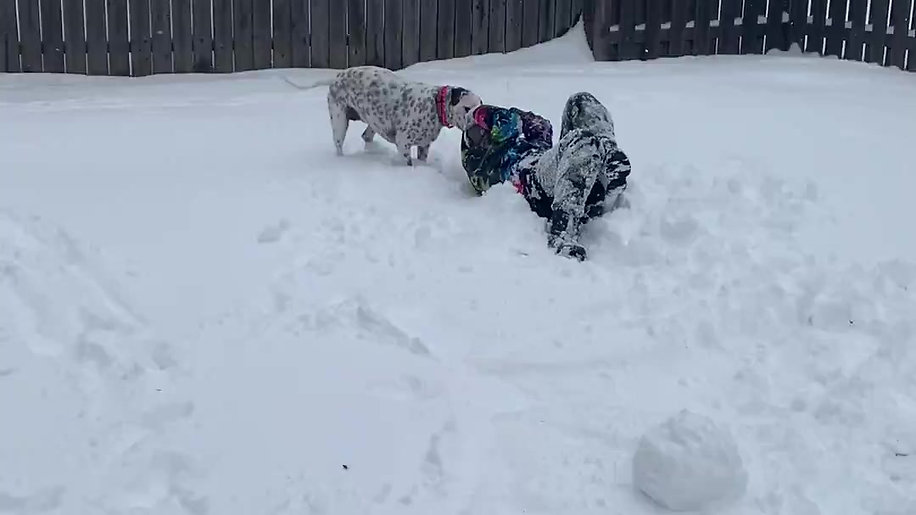 Brianna vs scout  in the snow