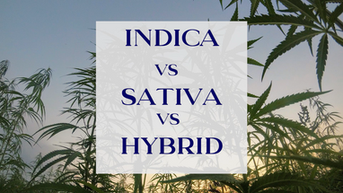 Ganjika House Indica vs Sativa vs Hybrid