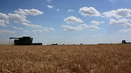 harvest pictures
