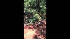 Workin' in the Woods!