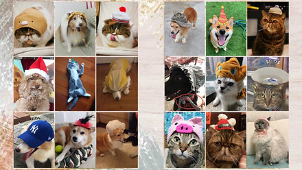 CPCF_Hatsonday_Pet