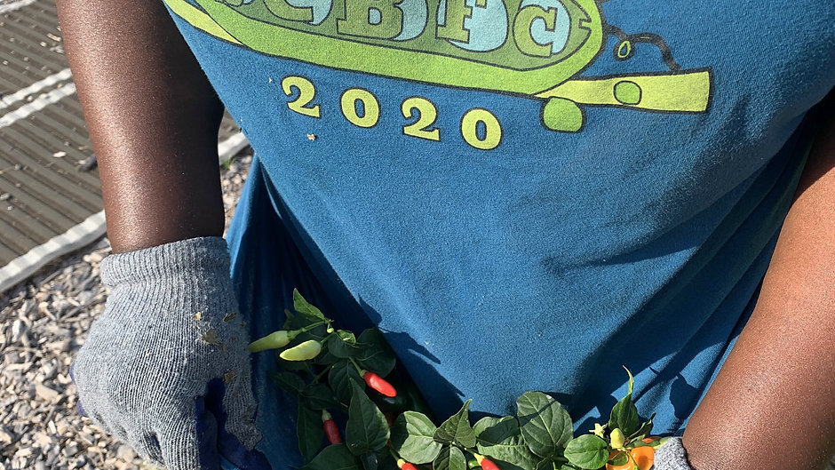 We are Fresh Future Farm