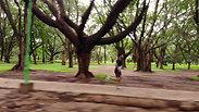 5k running at Cubbon Park, Bengaluru